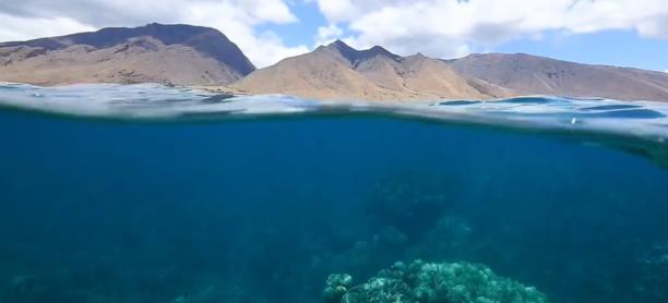 The Nature Paradigm- Maui's Sustainable Future