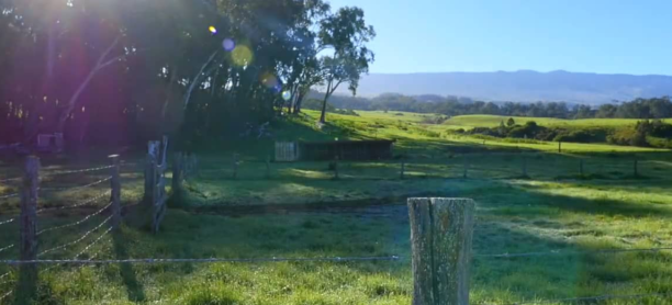 Ranch video
